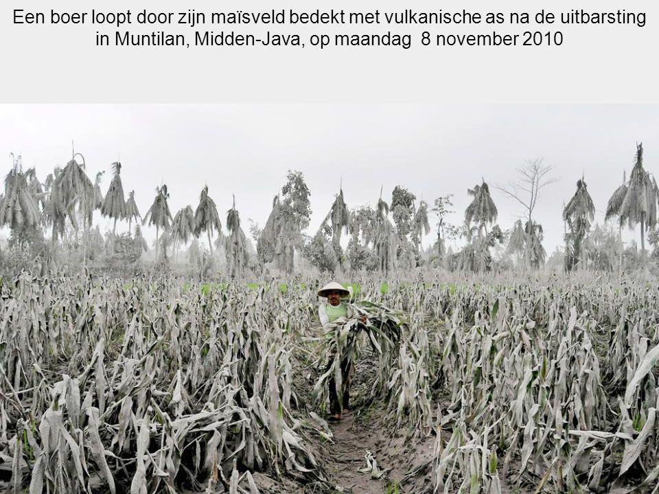 Een boer loopt door zijn maïsveld bedekt met vulkanische as na de uitbarsting in Muntilan, Midden-Java, op maandag 8 november 2010