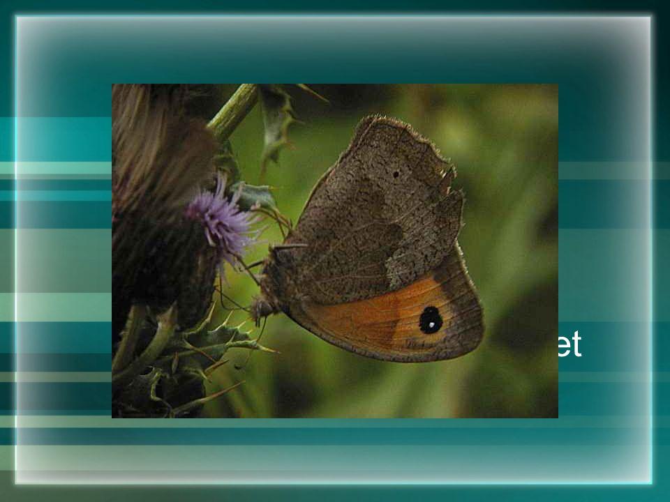 Geluk is als een vlinder,