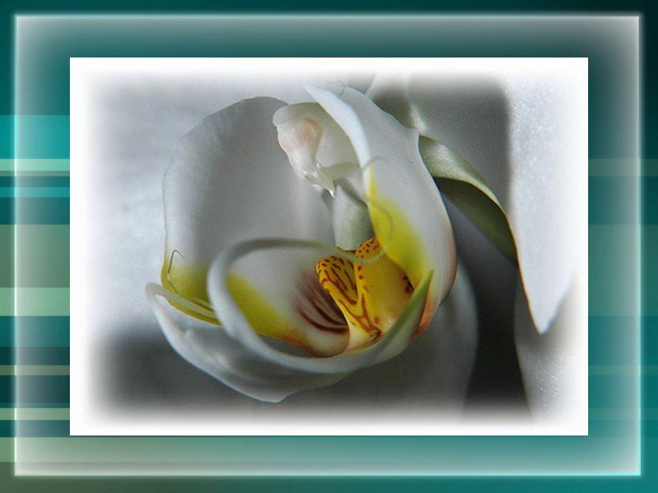 Bloemen van geluk moet je zelf planten...