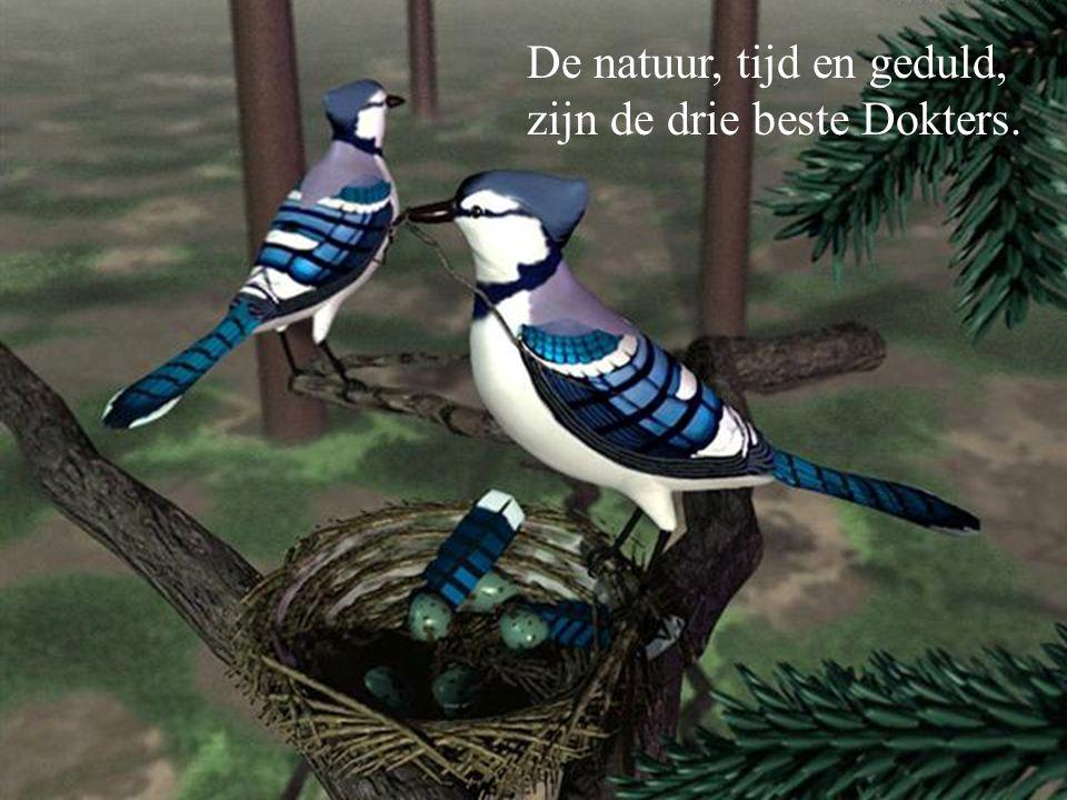 De natuur, tijd en geduld,