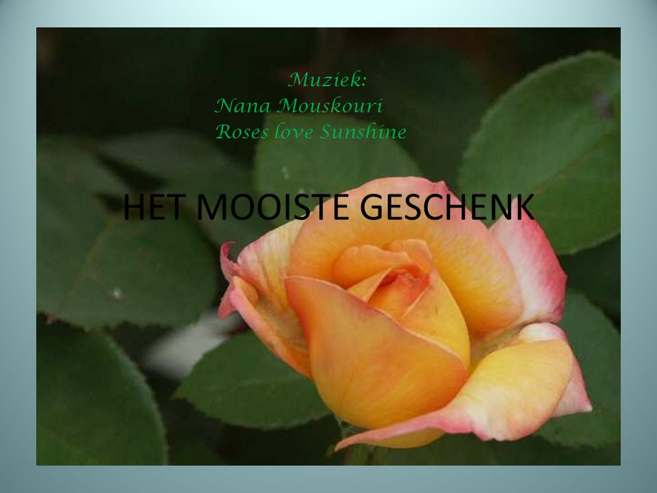 Muziek: Nana Mouskouri Roses love Sunshine