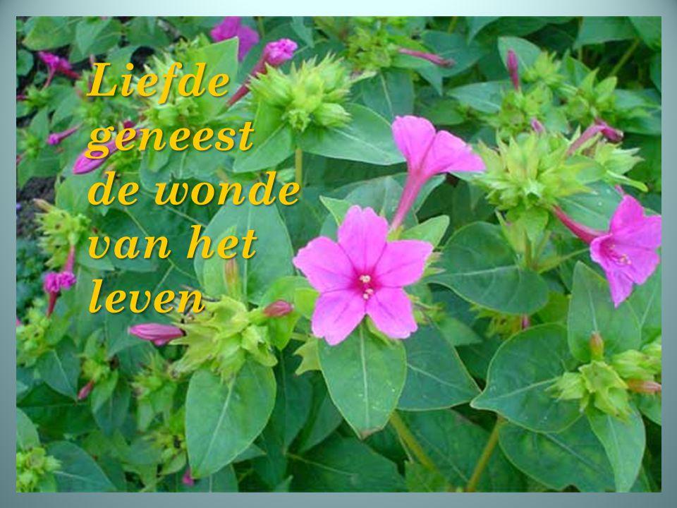Liefde geneest de wonde van het leven