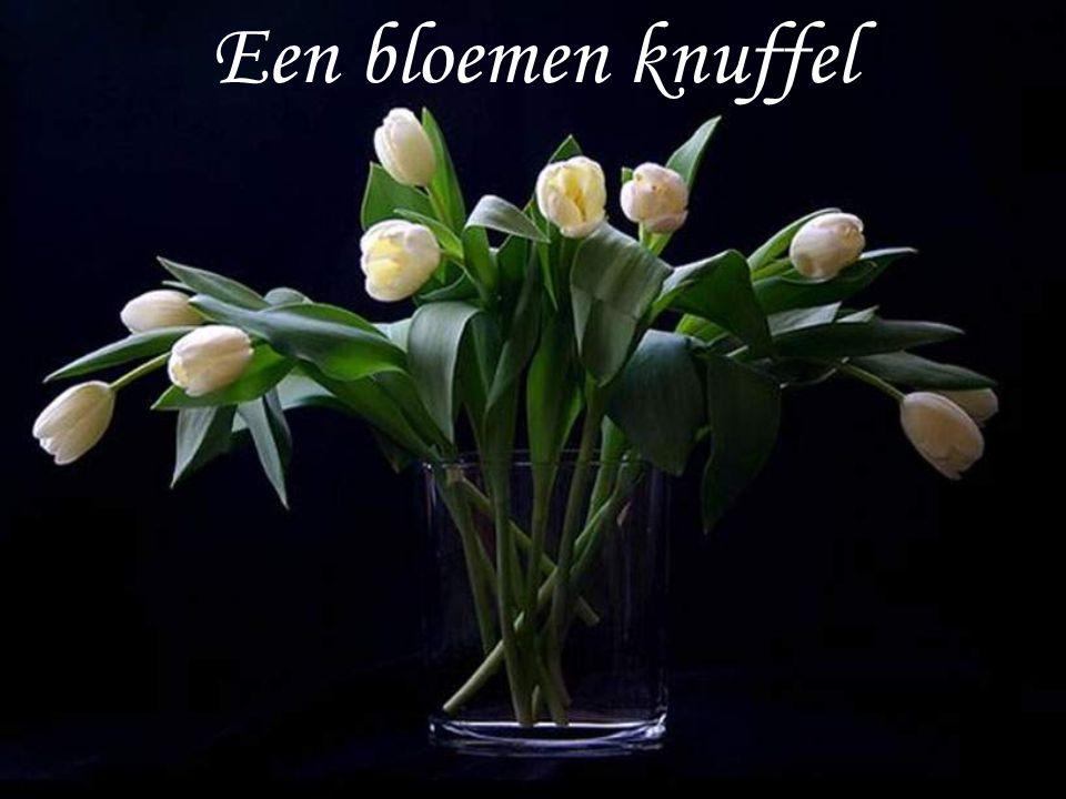 Een bloemen knuffel