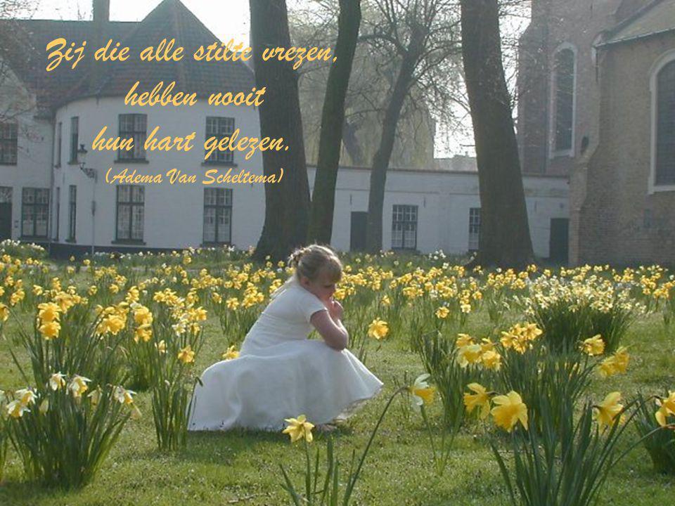 Zij die alle stilte vrezen, hebben nooit hun hart gelezen