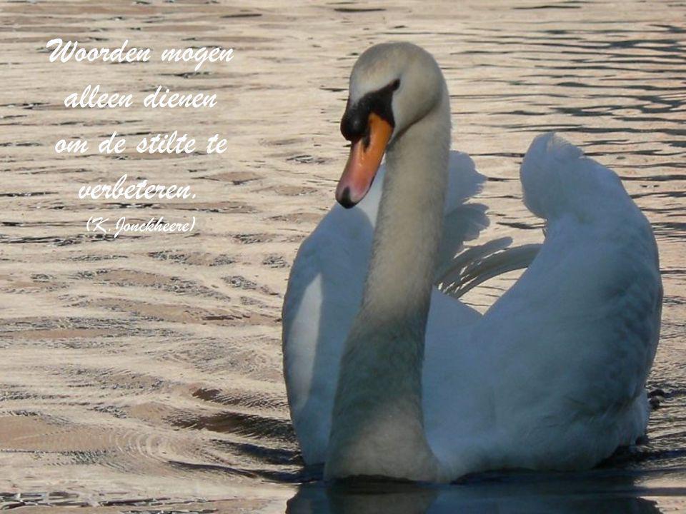 Woorden mogen alleen dienen om de stilte te verbeteren. (K.Jonckheere)