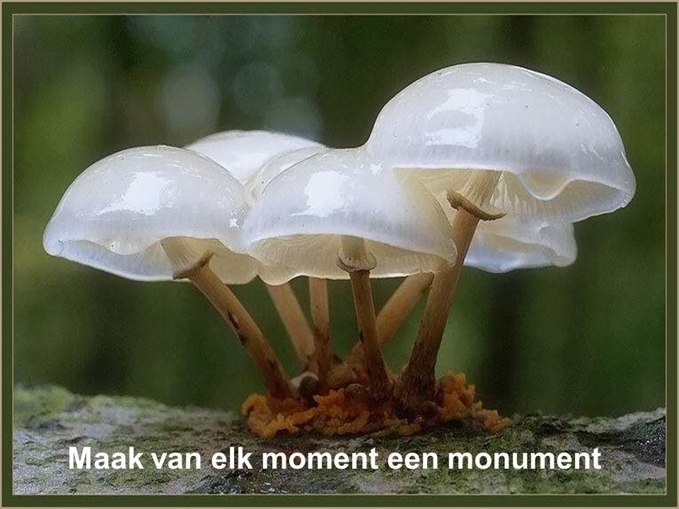 Maak van elk moment een monument