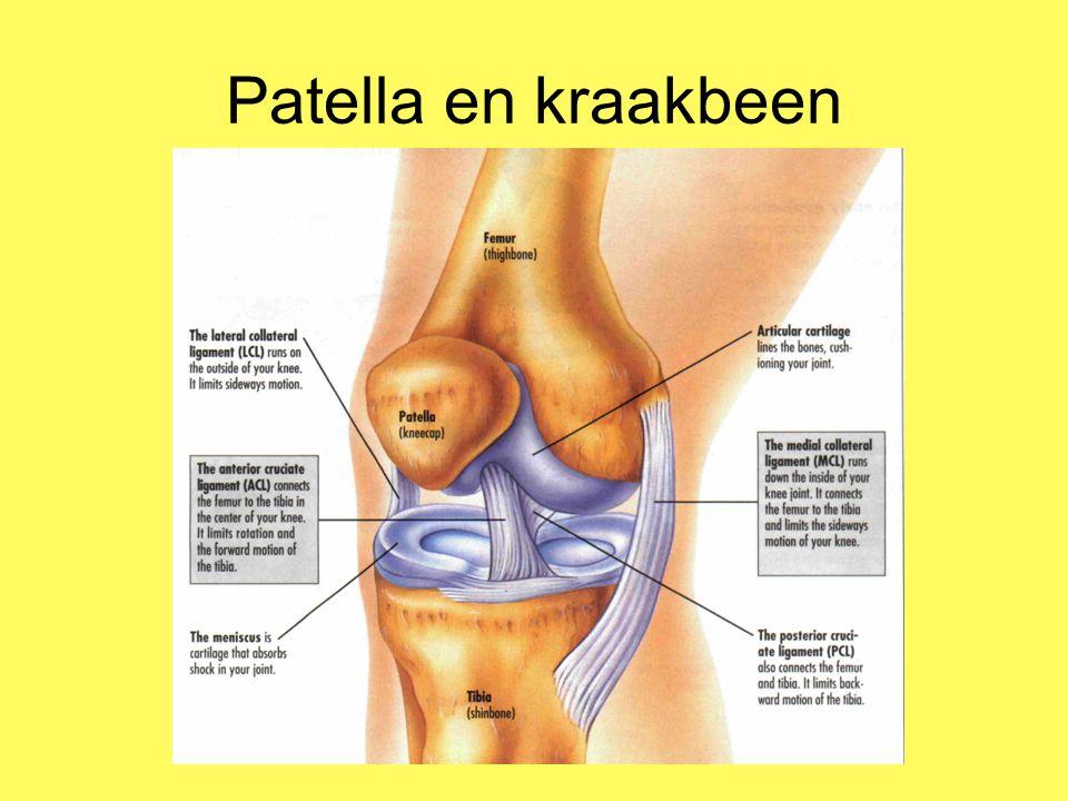 Patella en kraakbeen