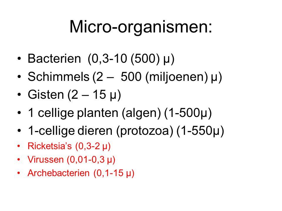 Micro-organismen: Bacterien (0,3-10 (500) μ)