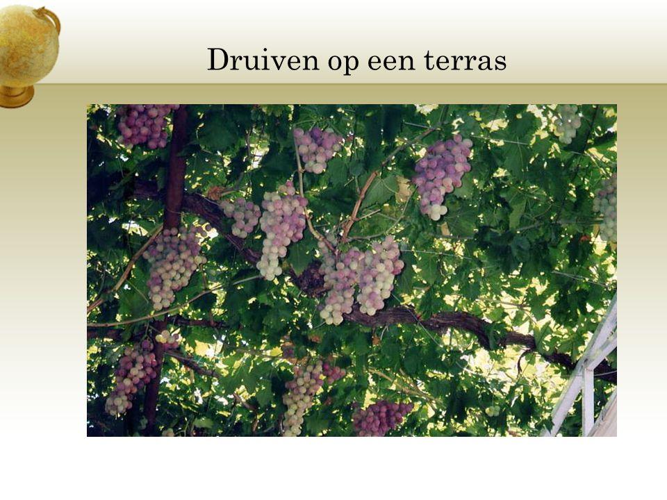Druiven op een terras