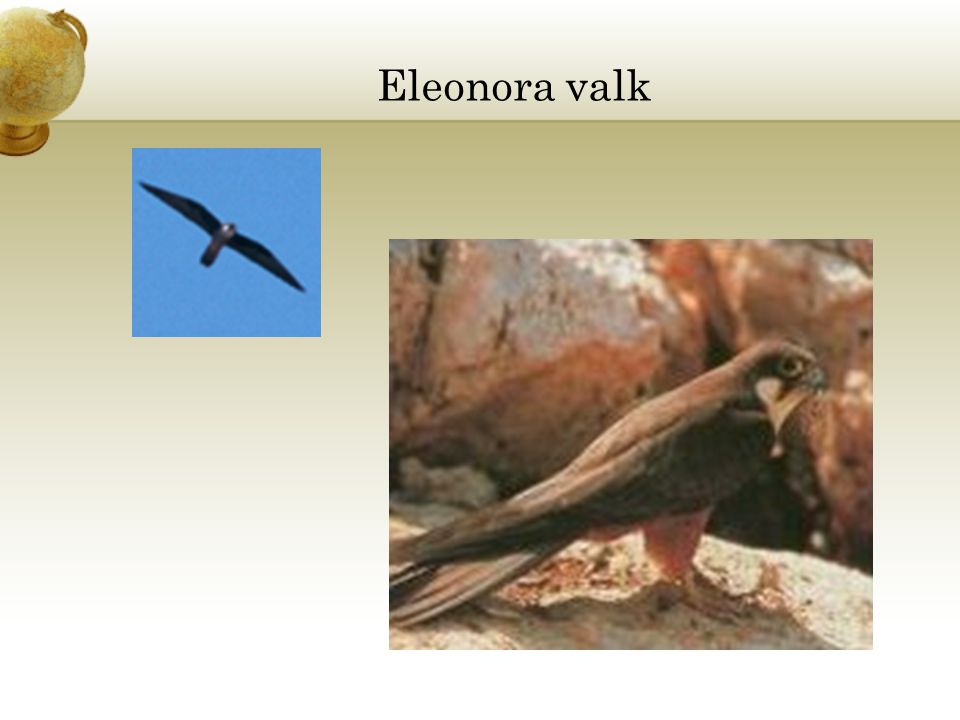 Eleonora valk