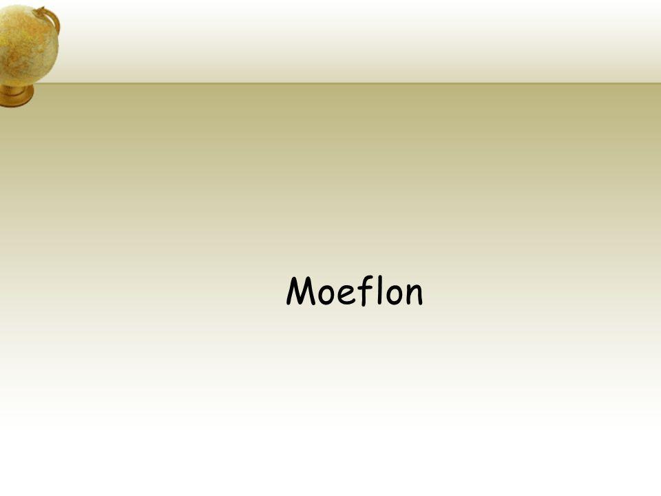 Moeflon