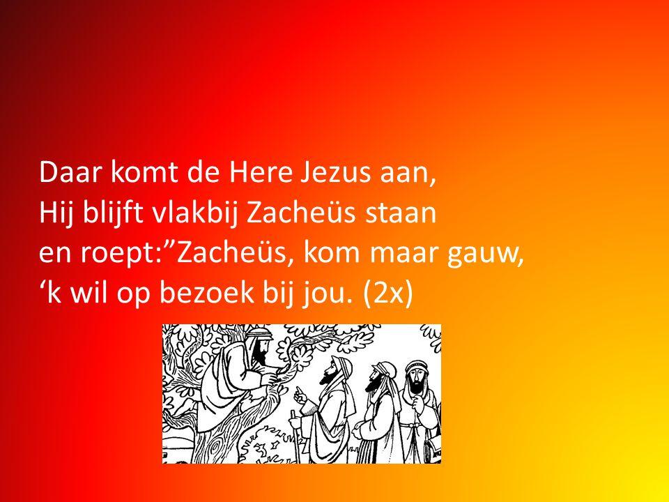 Daar komt de Here Jezus aan, Hij blijft vlakbij Zacheüs staan en roept: Zacheüs, kom maar gauw, 'k wil op bezoek bij jou.