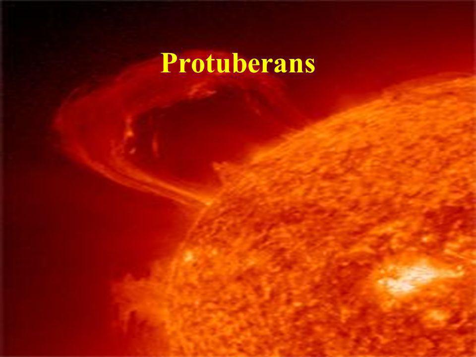 Protuberans