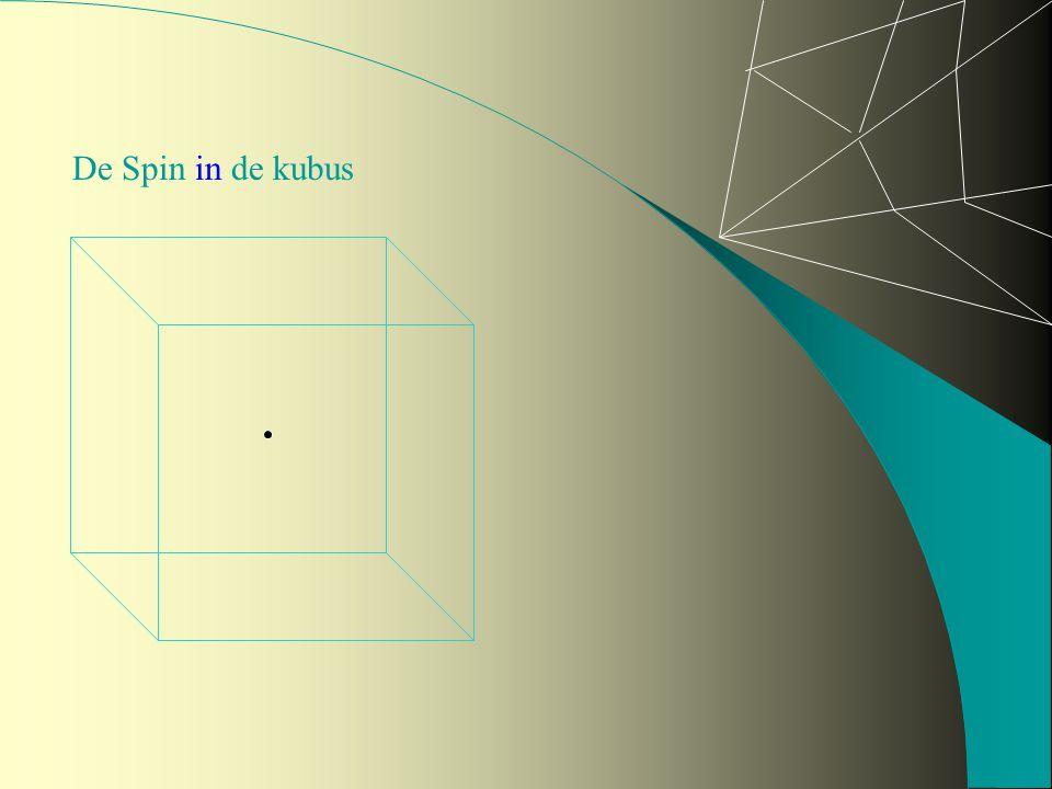 De Spin in de kubus