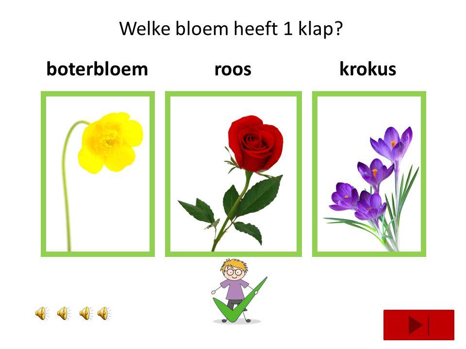 Welke bloem heeft 1 klap boterbloem roos krokus
