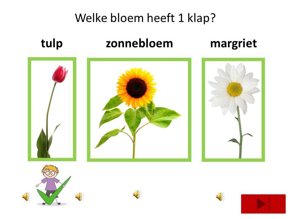 Welke bloem heeft 1 klap tulp zonnebloem margriet
