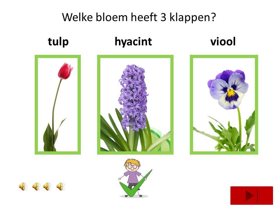 Welke bloem heeft 3 klappen