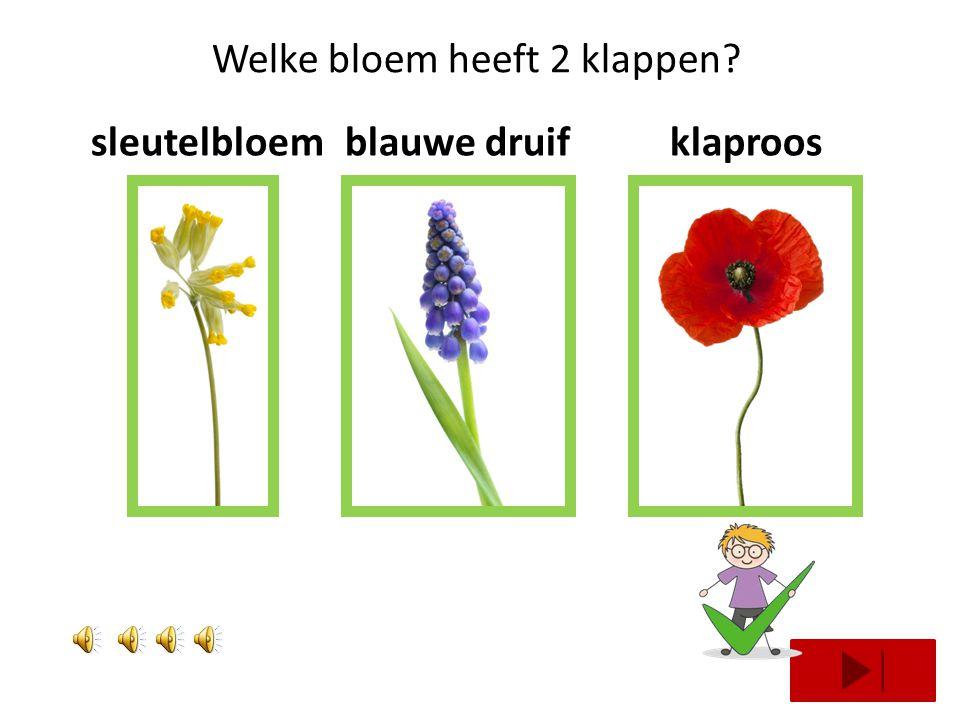Welke bloem heeft 2 klappen