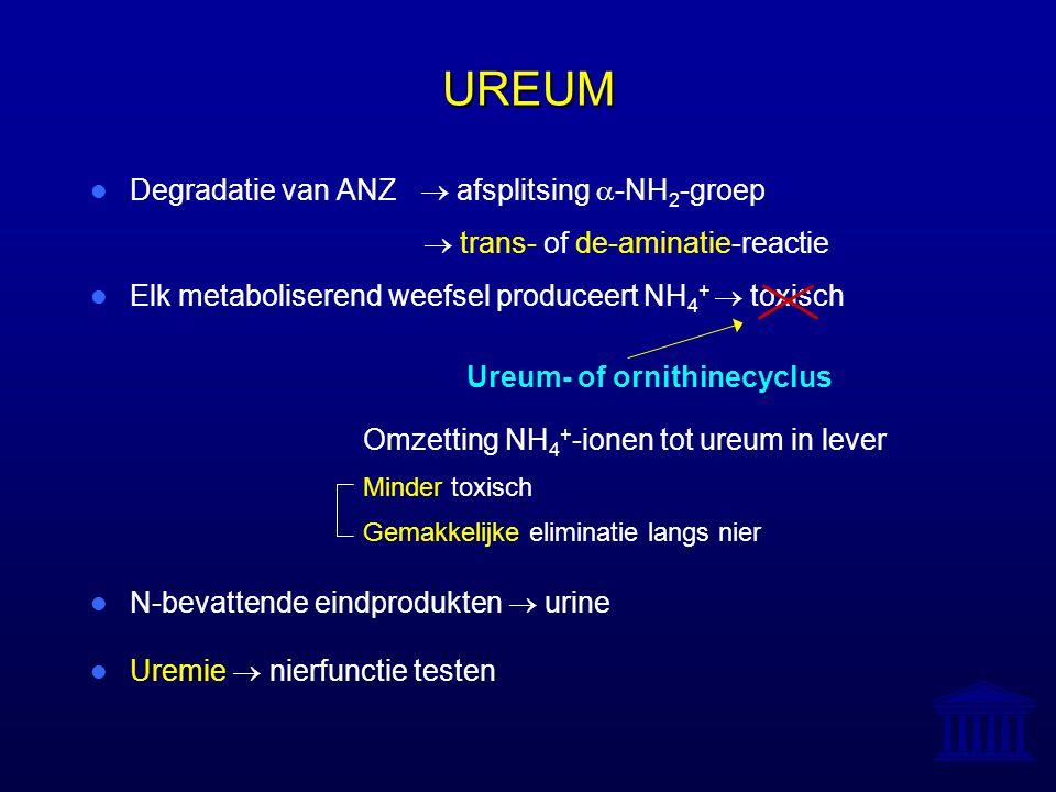 UREUM Degradatie van ANZ  afsplitsing a-NH2-groep
