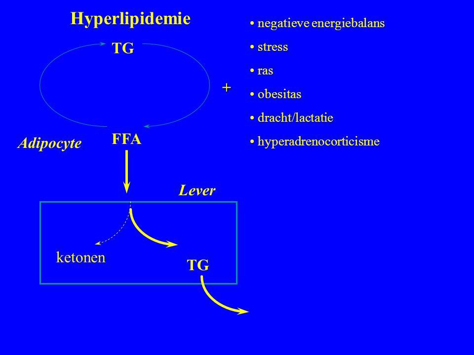 Hyperlipidemie TG + FFA Adipocyte Lever ketonen TG