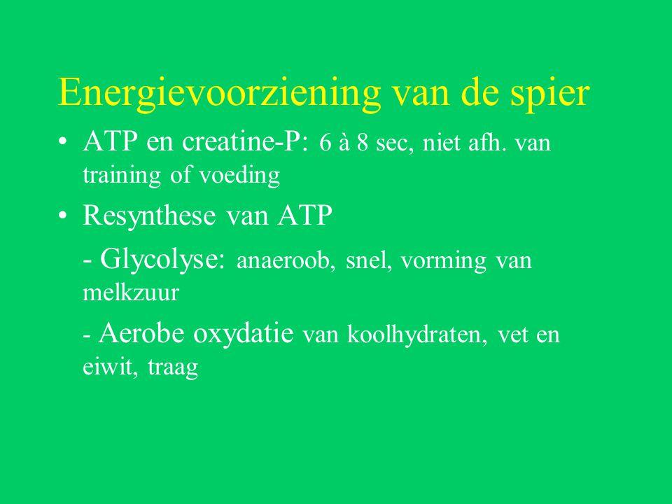 Energievoorziening van de spier
