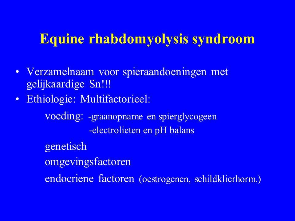 Equine rhabdomyolysis syndroom