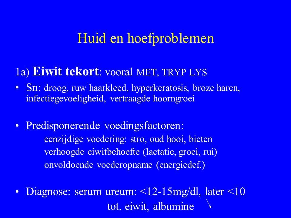 Huid en hoefproblemen 1a) Eiwit tekort: vooral MET, TRYP LYS