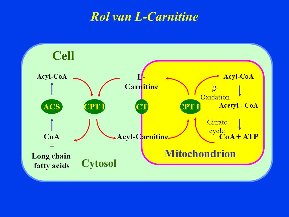 Rol van L-Carnitine Cell Mitochondrion Cytosol CoA + Long chain