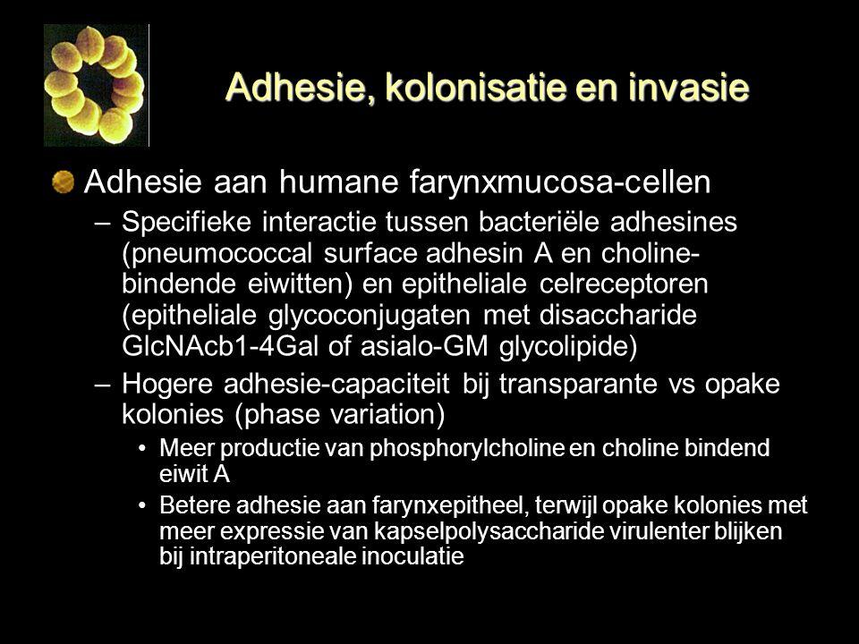 Adhesie, kolonisatie en invasie