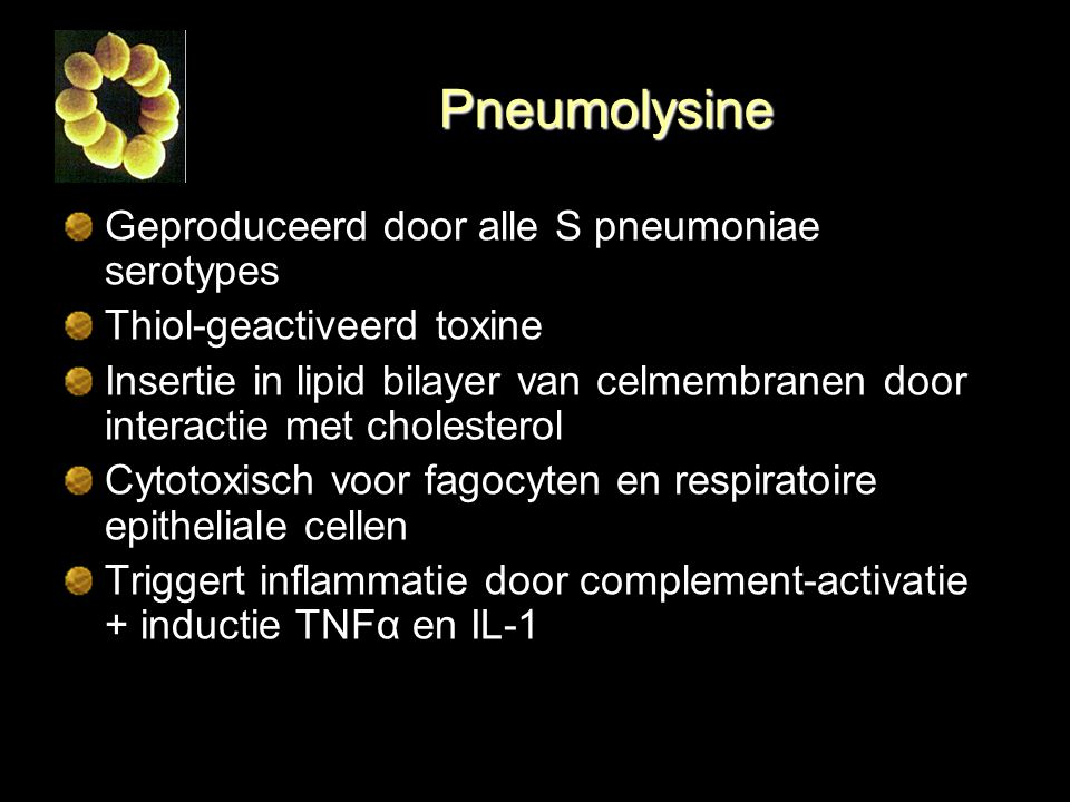 Pneumolysine Geproduceerd door alle S pneumoniae serotypes