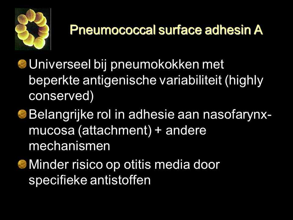 Pneumococcal surface adhesin A