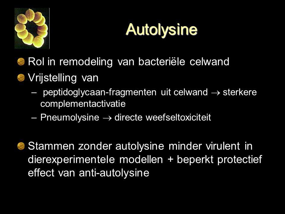 Autolysine Rol in remodeling van bacteriële celwand Vrijstelling van