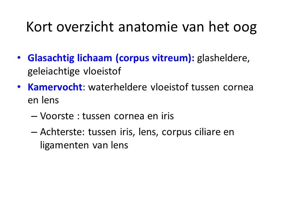 Kort overzicht anatomie van het oog