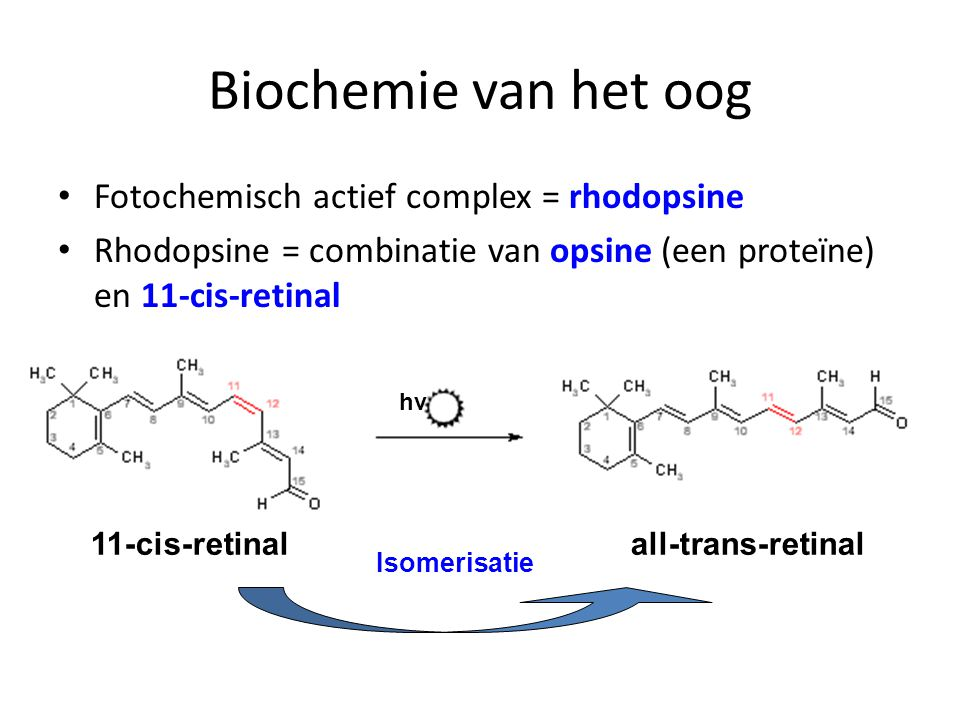 Biochemie van het oog Fotochemisch actief complex = rhodopsine