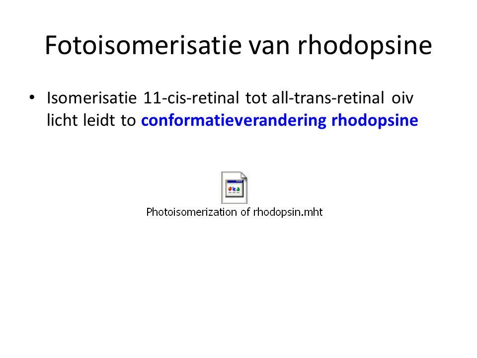 Fotoisomerisatie van rhodopsine