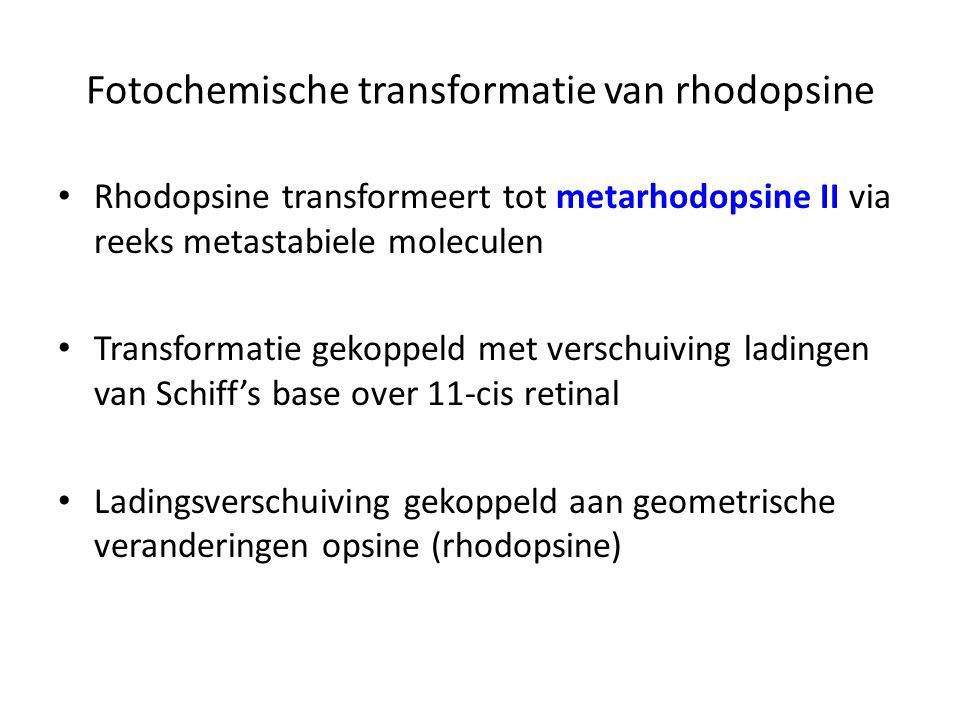 Fotochemische transformatie van rhodopsine