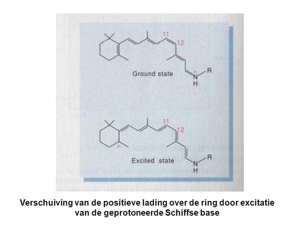 Verschuiving van de positieve lading over de ring door excitatie van de geprotoneerde Schiffse base