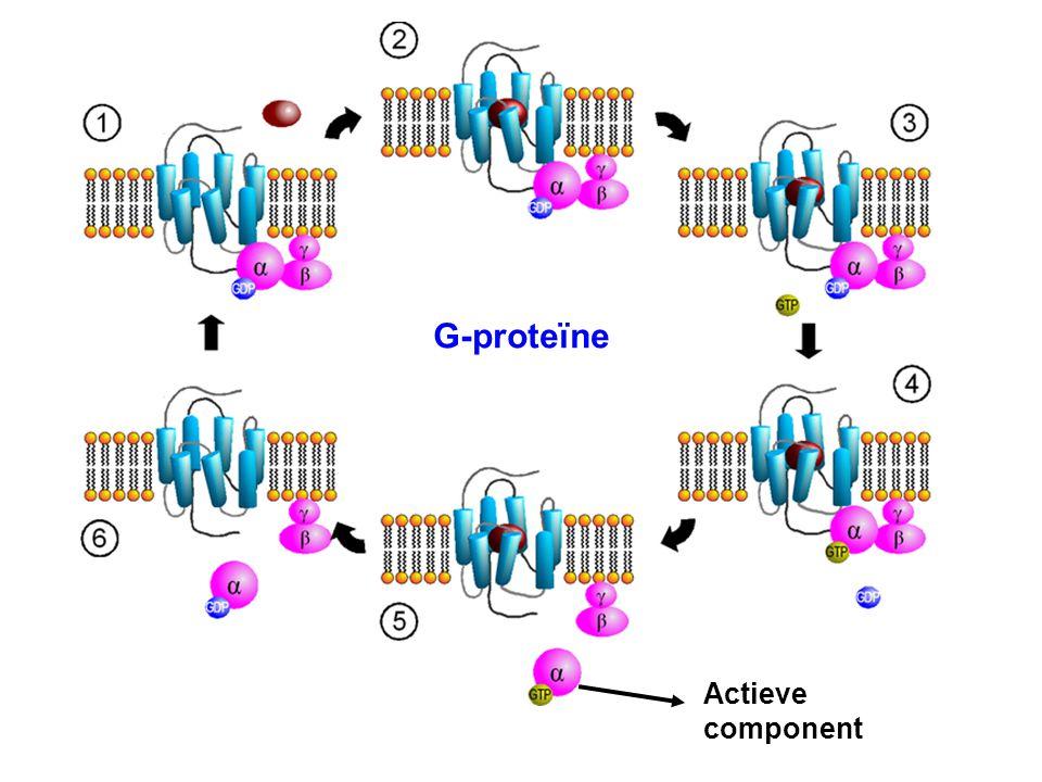 G-proteïne Actieve component