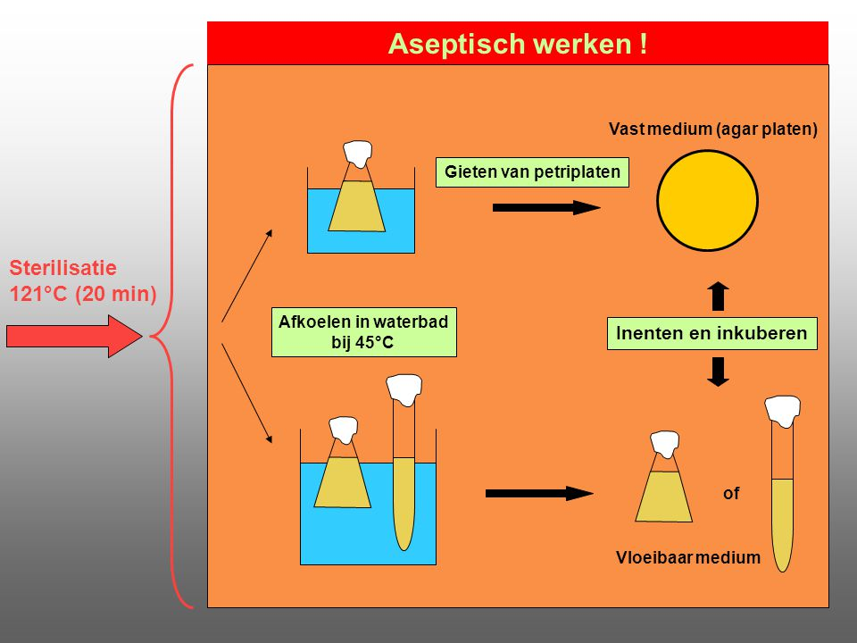 Aseptisch werken ! Sterilisatie 121°C (20 min) Inenten en inkuberen