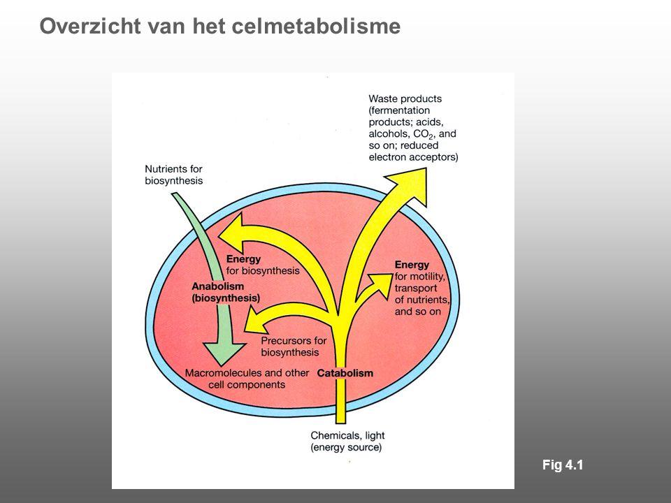 Overzicht van het celmetabolisme