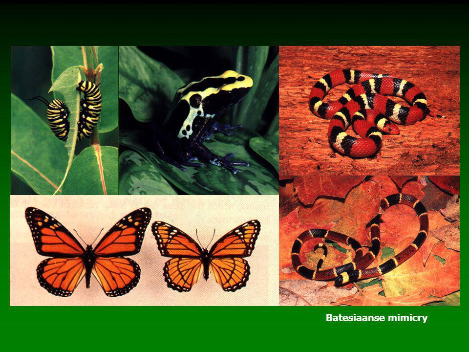Batesiaanse mimicry