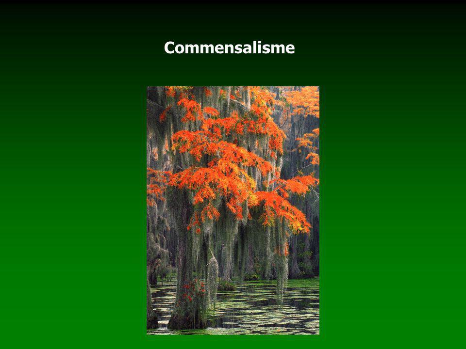Commensalisme