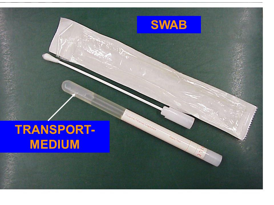SWAB TRANSPORT-MEDIUM