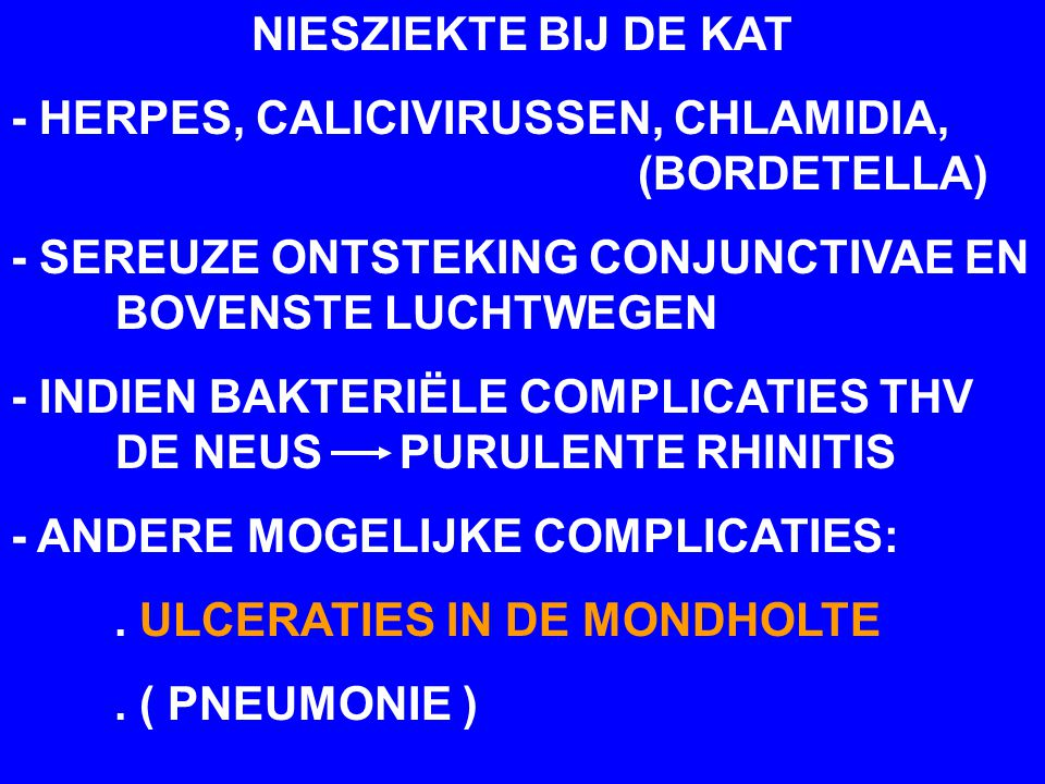 NIESZIEKTE BIJ DE KAT - HERPES, CALICIVIRUSSEN, CHLAMIDIA, (BORDETELLA) - SEREUZE ONTSTEKING CONJUNCTIVAE EN BOVENSTE LUCHTWEGEN.