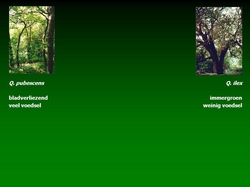 Q. pubescens bladverliezend veel voedsel Q. ilex immergroen weinig voedsel