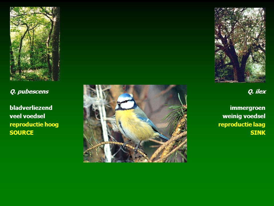 Q. pubescens bladverliezend. veel voedsel. reproductie hoog. SOURCE. Q. ilex. immergroen. weinig voedsel.