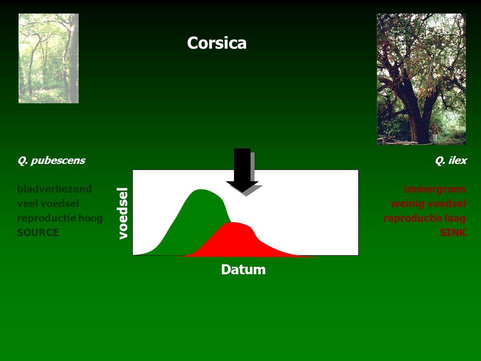 Corsica voedsel Datum Q. pubescens bladverliezend veel voedsel