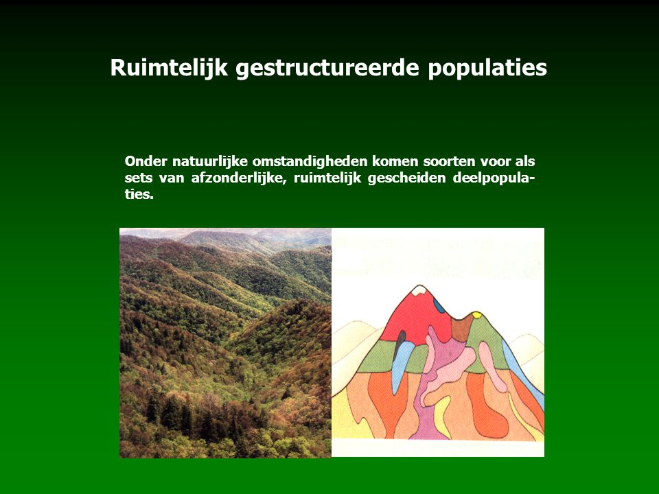 Ruimtelijk gestructureerde populaties