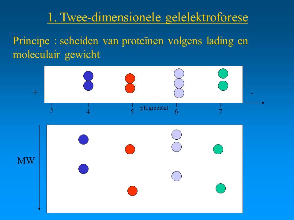 1. Twee-dimensionele gelelektroforese