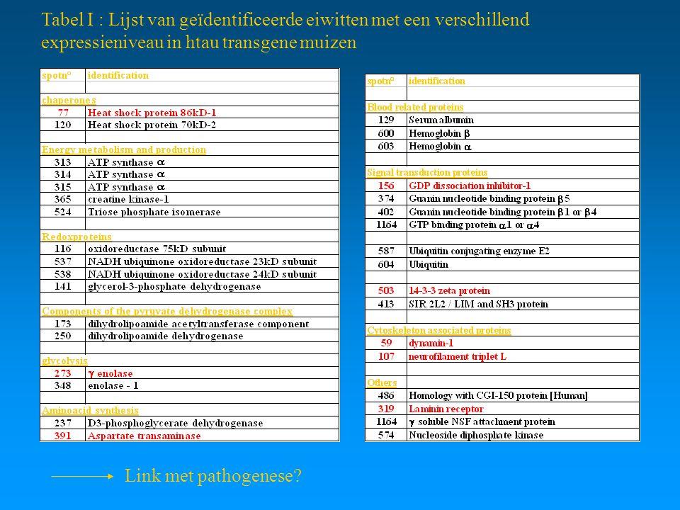 Tabel I : Lijst van geïdentificeerde eiwitten met een verschillend